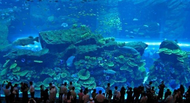 akvariumw38.jpg