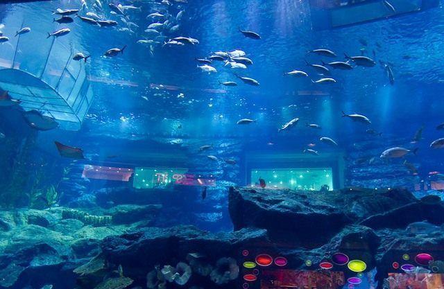 akvariumw39.jpg