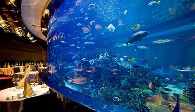 akvariumw40.jpg