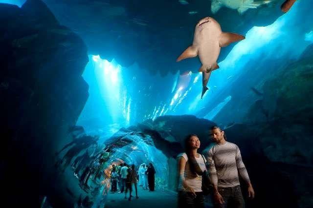 akvariumw41.jpg