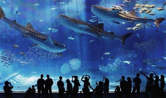 akvariumw44.jpg
