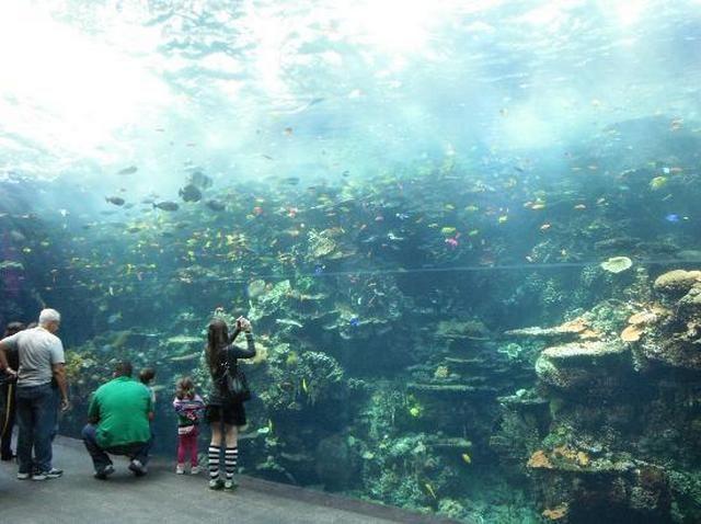 akvariumw45.jpg