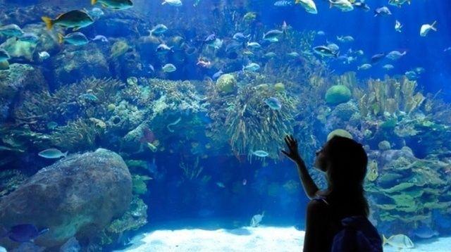 akvariumw5.jpg