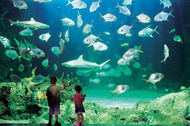 akvariumw6.jpg
