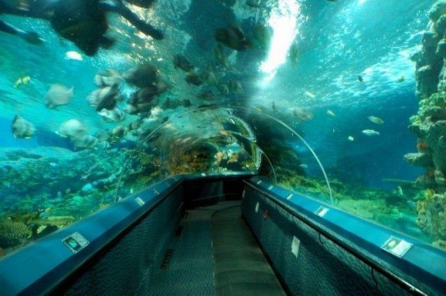 akvariumw7.jpg