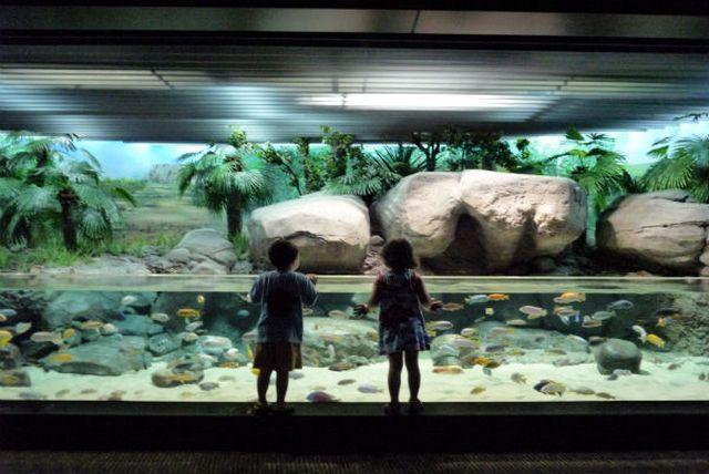 akvariumw8.jpg