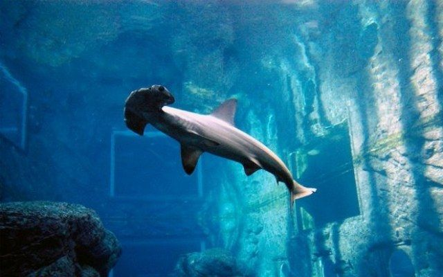 akvariumw10.jpg