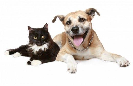 Хто розумніший: кішки або собаки?