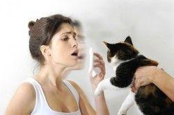 Лікування алергії на кішок