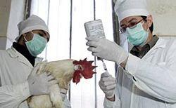 Лікування і профілактика грипу, пташиний грип