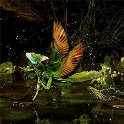 Літає, але не птах? 9 дивних літаючих тварин