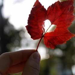 Любовний гороскоп: як зустріти і залучити любов при венері в діві?