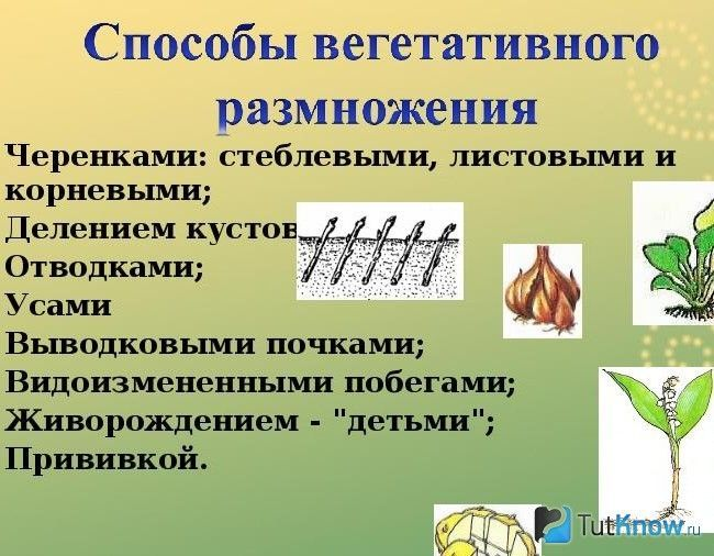 Способи вегетативного розмноження