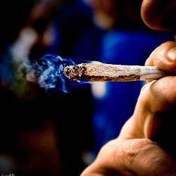 Краще зрідка курити марихуану, ніж постійно курити тютюн