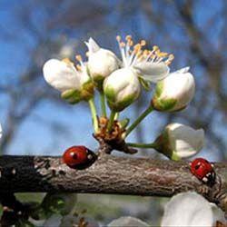 Місячний календар для рослин на квітень 2015