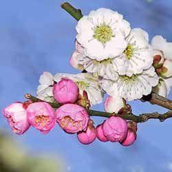 Місячний календар для рослин на квітень 2016