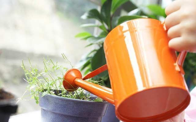 plants0816-2.jpg