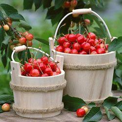 Місячний календар для рослин на червень 2014