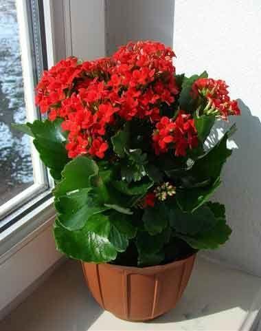 plants0515-20.jpg