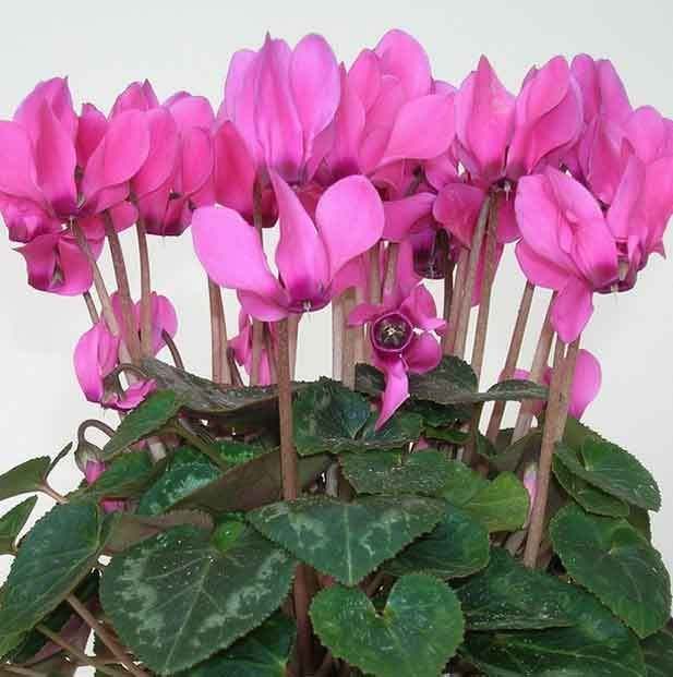 plants0515-21.jpg