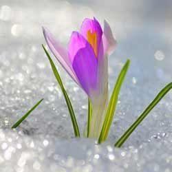 Місячний календар для рослин на березень 2014