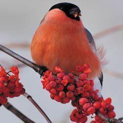 Місячний календар для рослин на листопад 2015