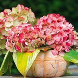 Місячний календар для рослин на жовтень 2014