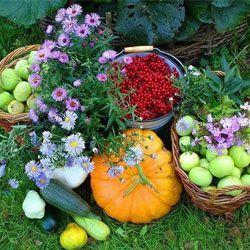 Місячний календар для рослин на вересень 2013