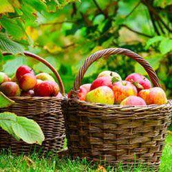 Місячний календар городника і садівника на серпень 2013