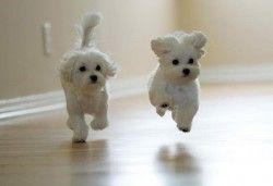 Маленькі породи собак