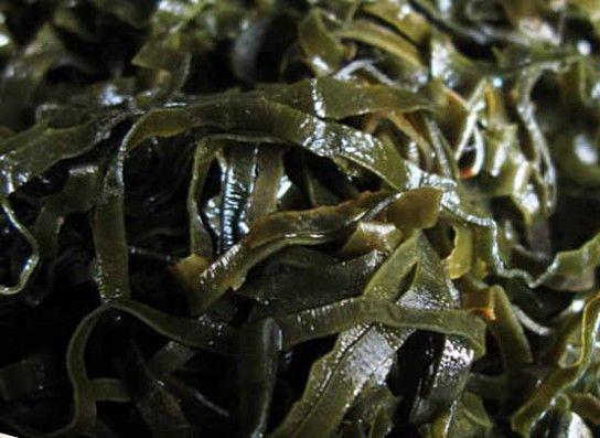 Морська капуста при вагітності: користь, протипоказання, відгуки
