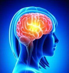 Мозок жінок менше, але ефективніше, ніж у чоловіків