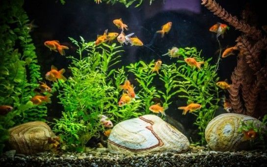 Причини каламутної води в акваріумі