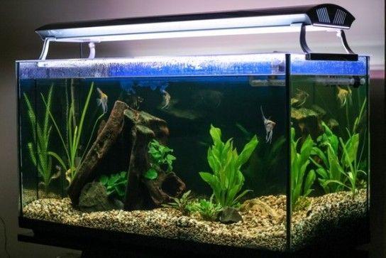 Як не допустити каламутність води в новому акваріумі?