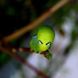 Комахи, що належать світу прибульців