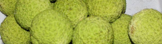 Настоянка «адамове яблуко» для суглобів: як приготувати і застосовувати