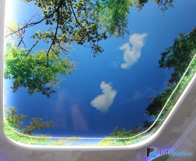 Натяжна стеля у вигляді неба з гілками дерев
