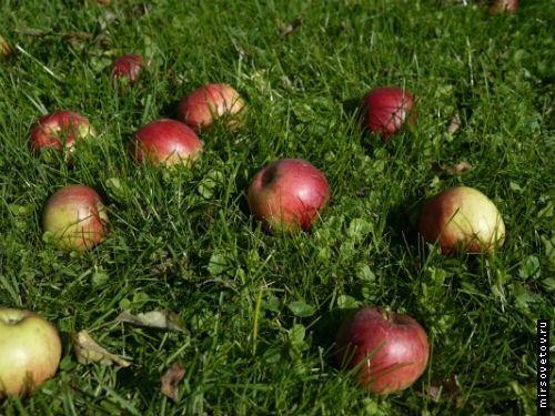 Кілька яблучних рецептів