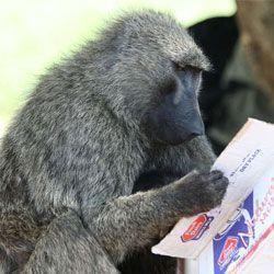 Мавпи вміють розпізнавати написані слова