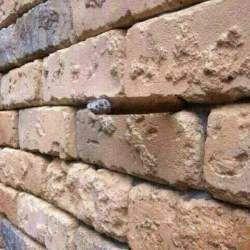 Оптична ілюзія з цегляною стіною звела інтернет користувачів з розуму