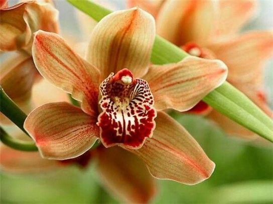 Орхідея відцвіла: що робити зі стрілою?
