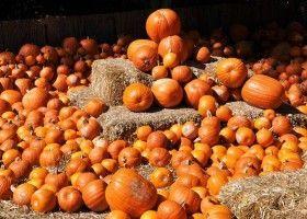 Особливості вирощування насіння гарбузових культур