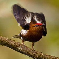 Відкрито секрет птахів, які вміють