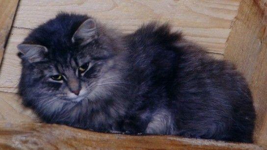 Отруєння кішки: симптоми і лікування