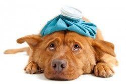 Парвовірусний ентерит у собак