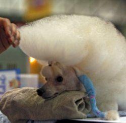 Перший в світі семизірковий готель для домашніх тварин