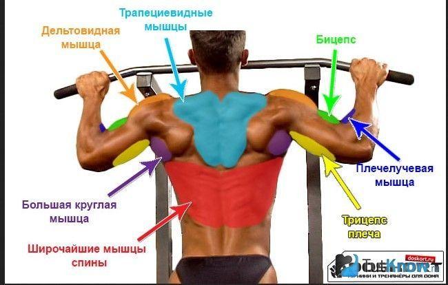 Схема задіяних м`язів при підтягуванні