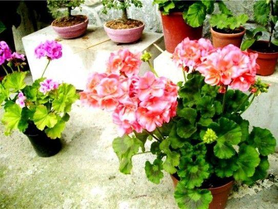 Секрети догляду за рослиною