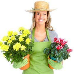 Корисні поради квітникарям: місячний календар кімнатних рослин на серпень 2013
