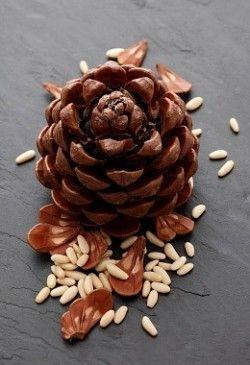 Корисні властивості кедрових горіхів